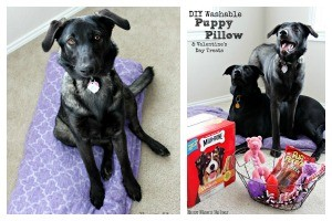 DIY Washable Puppy Pillow & Valentine's Day Treats