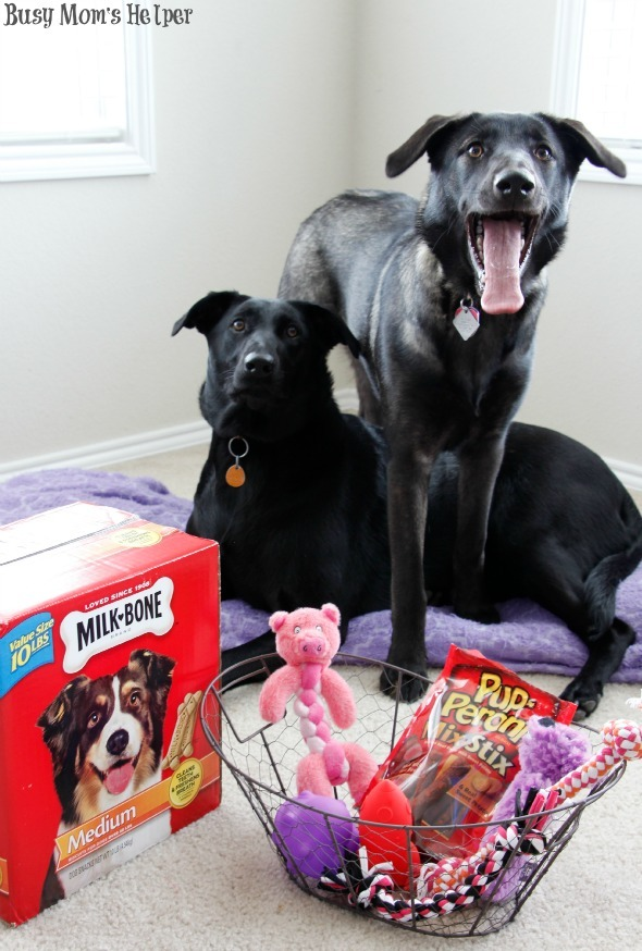 DIY Washable Puppy Pillow & Valentine's Day Treats / by Busy Mom's Helper #puppies #sewing #craft #Valentines #TreatThePups #Ad