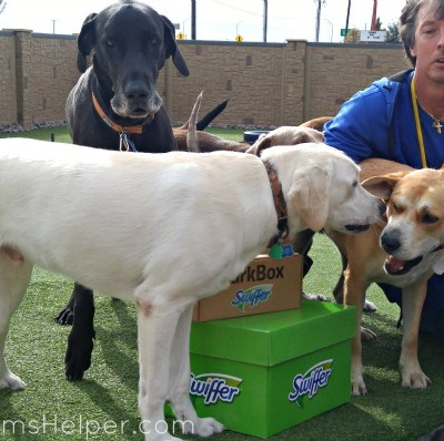To the People who Saved Our Dog / by BusyMomsHelper.com #ShedHappens #SwifferFanatic @BarkBox @Swiffer #ad