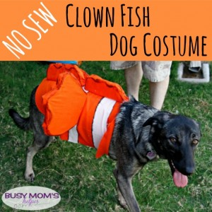 No Sew Clown Fish Dog Costume