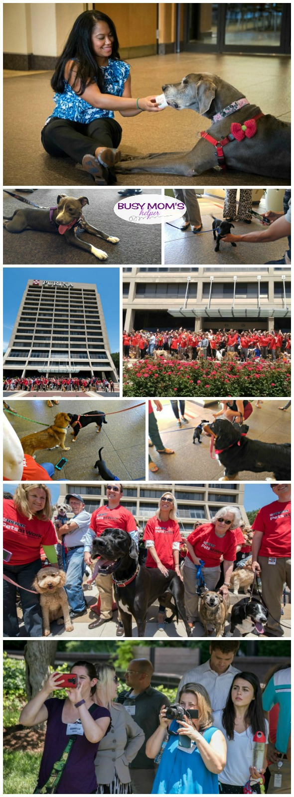 Lots of furry friends at Pets at Work Day by Purina #MeetPurina #ad