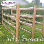 Vertical Strawberries by Nikki Christiansen for Busy Mom's Helper