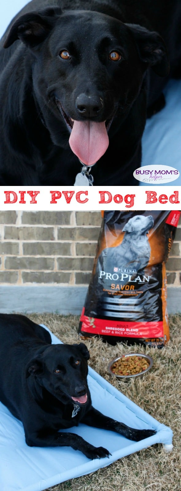 DIY PVC Dog Bed - Your pets will love this DIY PVC Dog Hammock Tutorial! #TheDogumentaries #ad