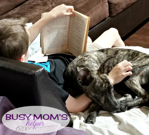 Purina on Amazon: Less Time Shopping, More Time With Family #Ad #PurinaPetPack