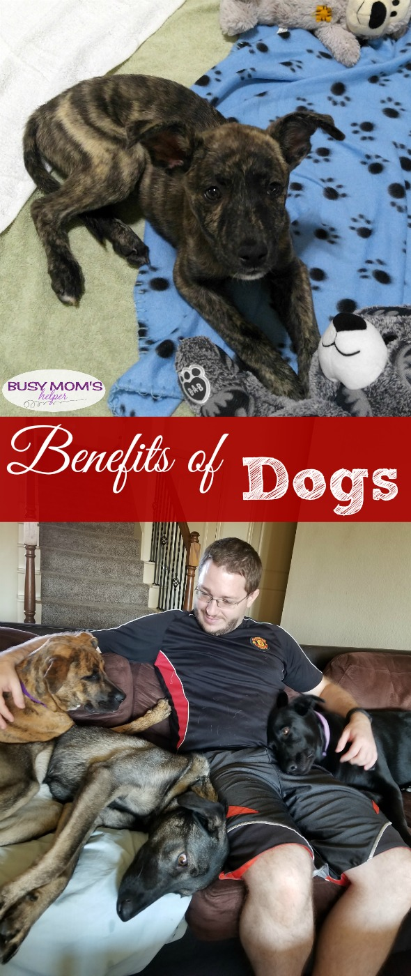 Benefits of Dogs #AD #DogsAreMore #IC