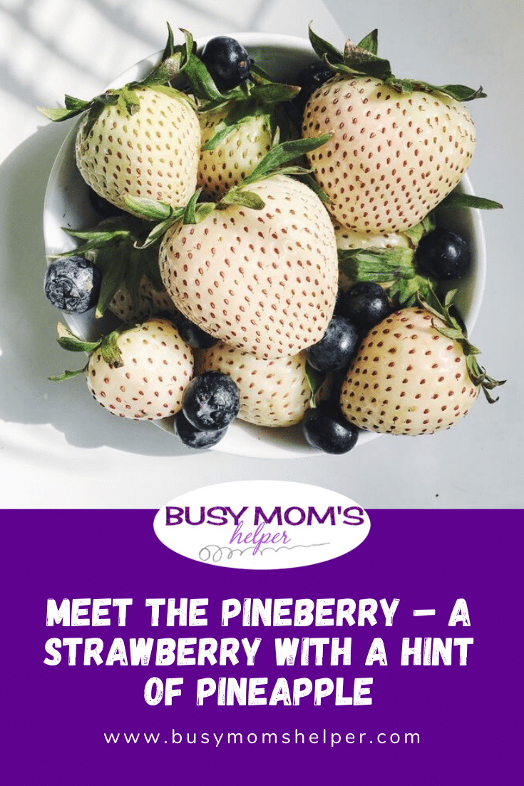 Meet the Pineberry – a Strawberry with a Hint of Pineapple