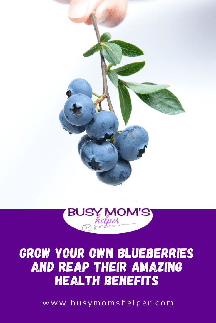 Grow Your Own Blueberries and Reap Their Amazing Health Benefits